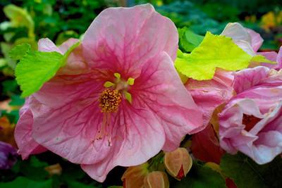 Mohonk Flower