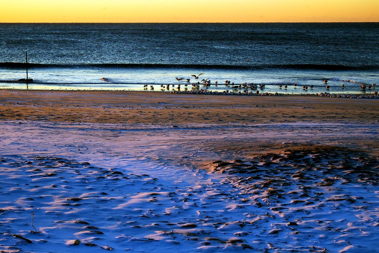Rockaway Beach Morning Birds