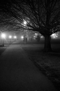 Park, Night, Fog