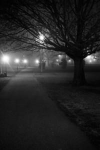 Park, Night, Fog