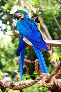 Animal Kingdom Fauna