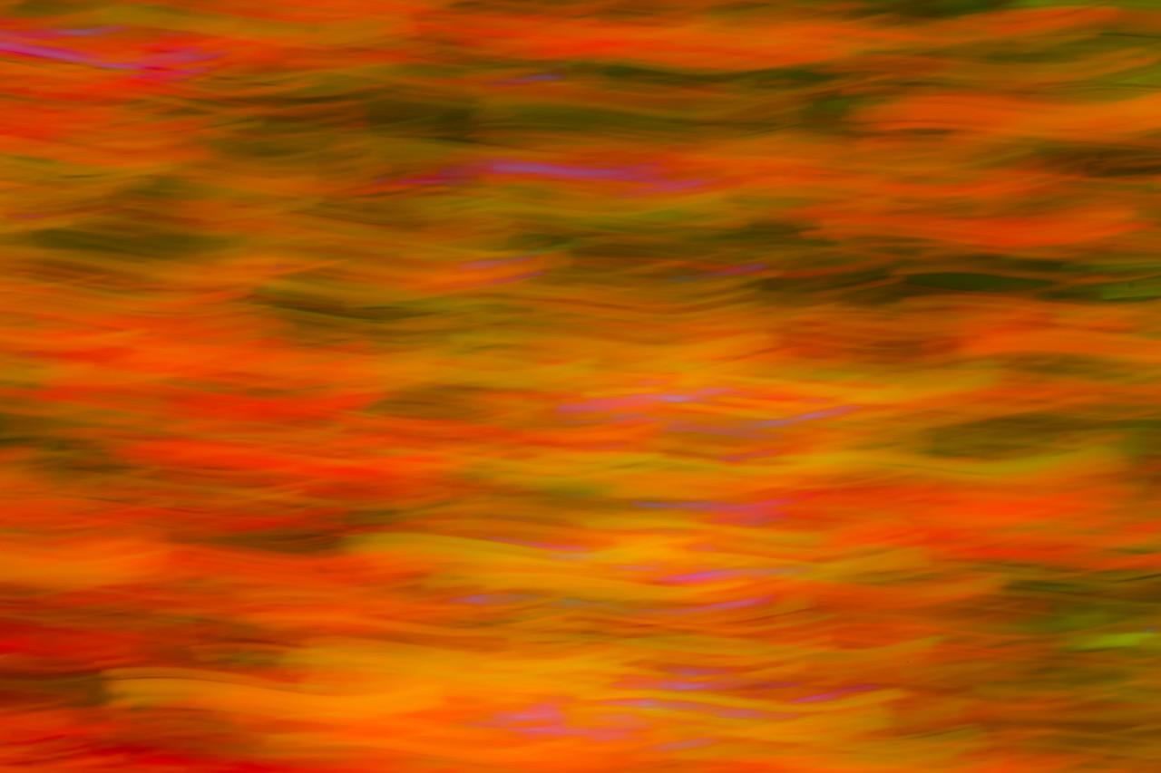 White Mountain Fall Abstract #5