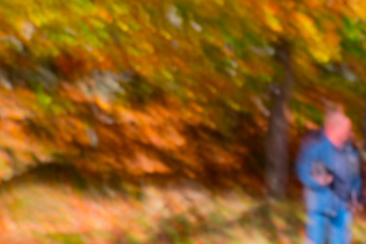 White Mountain Fall Abstract #4