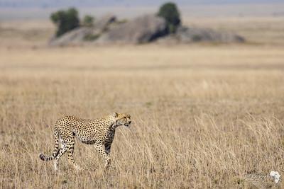 The Dry Serengeti