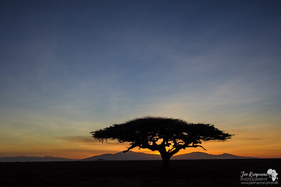 Morning Africa