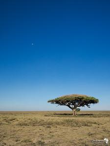 Vast Africa