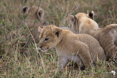 Three little cubs