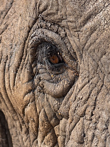 Look in to the soul of an elephant