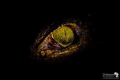 Eye of a Killer