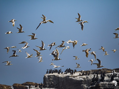 Flock in flight