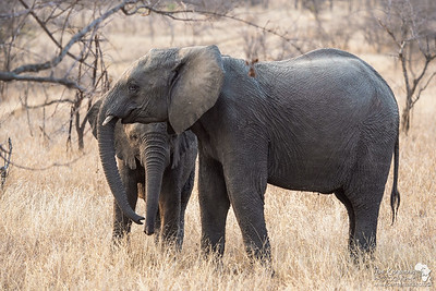 Elephants making a natural frame
