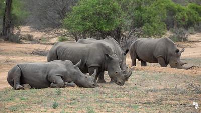 Crash of Rhino