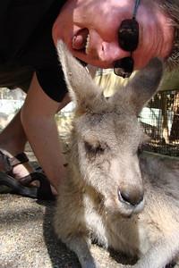 WAKE UP Kangaroo!  Time to Play!