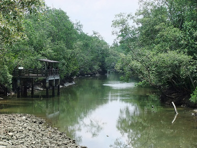 Looking into the mangrove swamps of Pasir Ris National Park