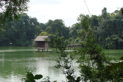 The zoo is in a VERY natural setting on a peninsula surrounded by one of Singapore resevoirs.