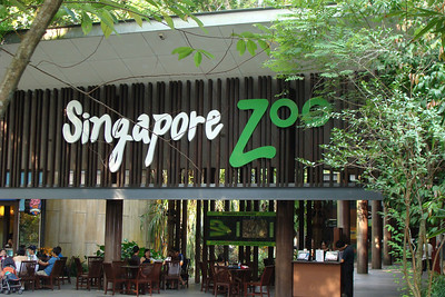 Singapore Zoo time!    Great zoo - advertised as the world's best rainforest zoo and, to be honest, does a pretty good job living up to it's name