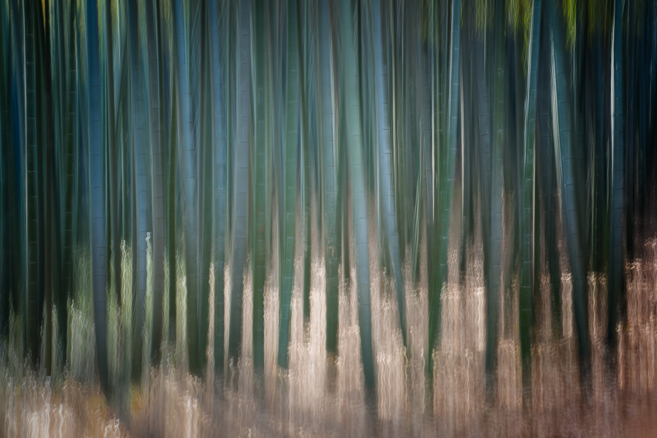 Surreal Bamboo Forest