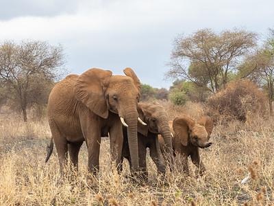 A happy trio of elephants