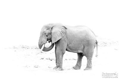Highkey Elephant