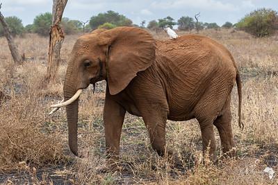 Mama Tembo
