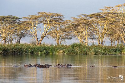 The Hippo pool in the Ngorongoro Crater