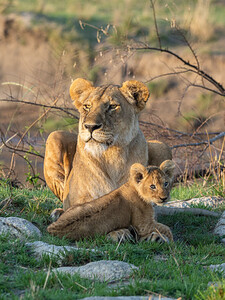 This cub shows such affection for its mother