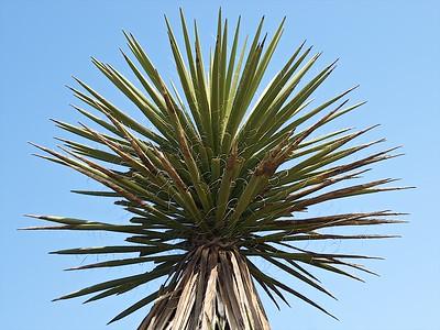 Torrey Pines Reserve La Jolla CA