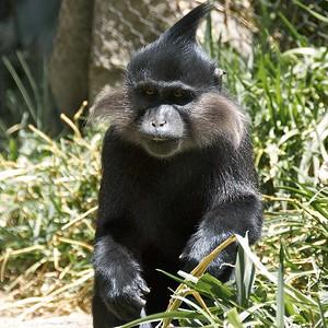 San Diego Zoo Balboa Park CA