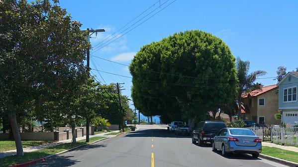 San Pedro CA