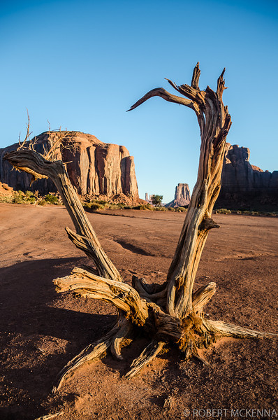 Monument Valley Shrub