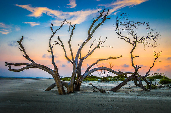 Dead Trees at the Beach