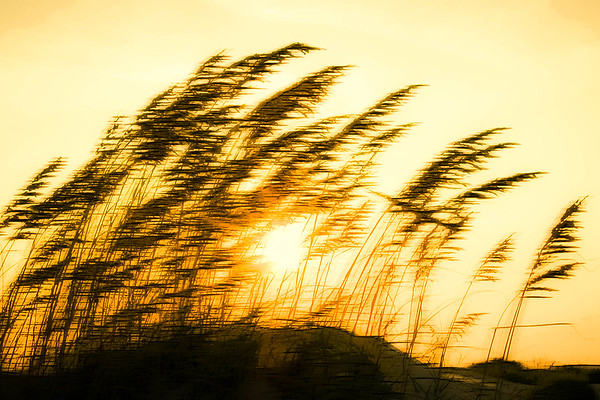 Sun Through Reeds #2, Graphic