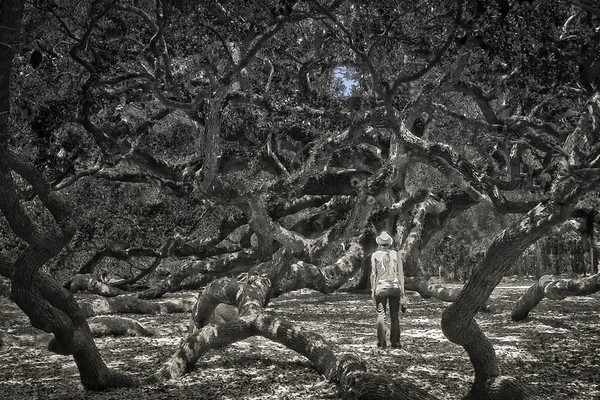 Inspired by the Angel Oak