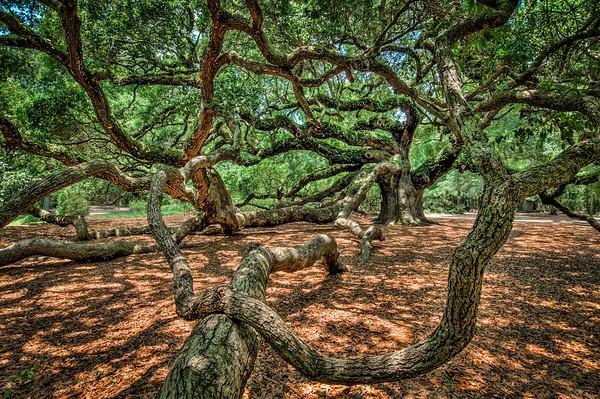 Angel Oak #4