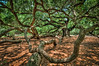 Angel Oak #4