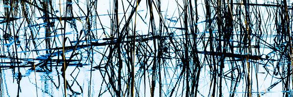 Marsh Grass #2