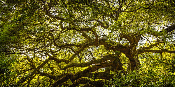 Angel Oak #2
