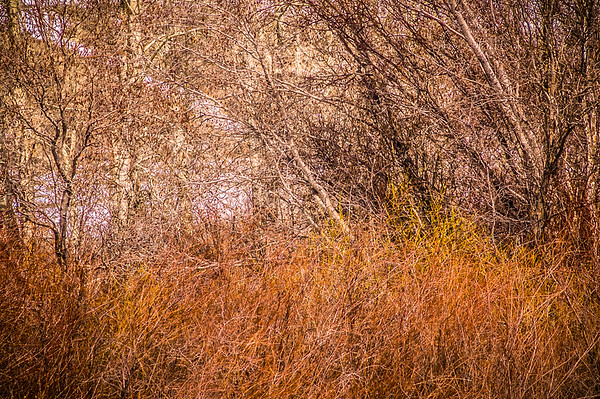 Colorful Thicket