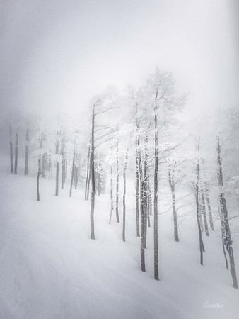 Snow Storm in Steamboat Springs #2