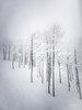 Snow Storm in Steamboat Springs #2
