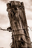 Tree Trunk Post and Barbwire, Sepia