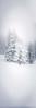 Snow Storm in Steamboat Springs #1