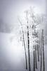 Snow Storm in Steamboat Springs #3