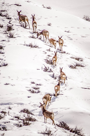 Herd of Deer on the Hill