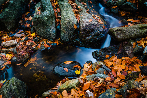 Thistle Creek #3
