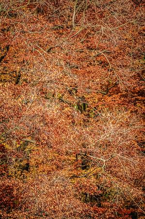 Fall Tree Pattern #3