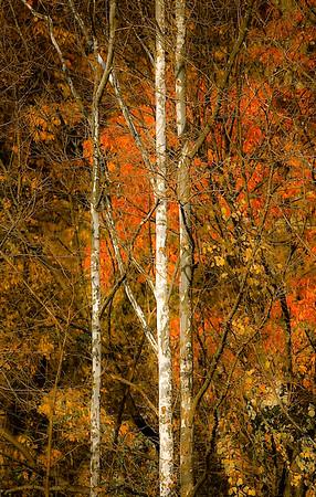Fall Tree Pattern #4
