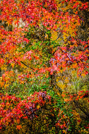 Colorful Tree With Vine