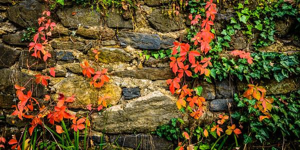 Stone Wall and Foliage