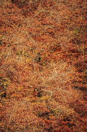 Fall Tree Pattern #1